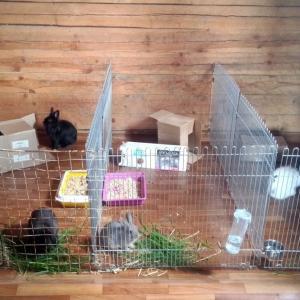 Прошу помощи для кроликов