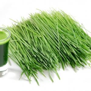 Зеленые ростки пшеницы, подсолнечника. Доставка в пределах МКАД бесплатно.