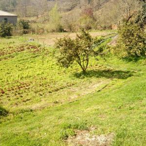 Зелень с открытого грунта круглый год с доставкой по Москве(свой огород в Абхазии)